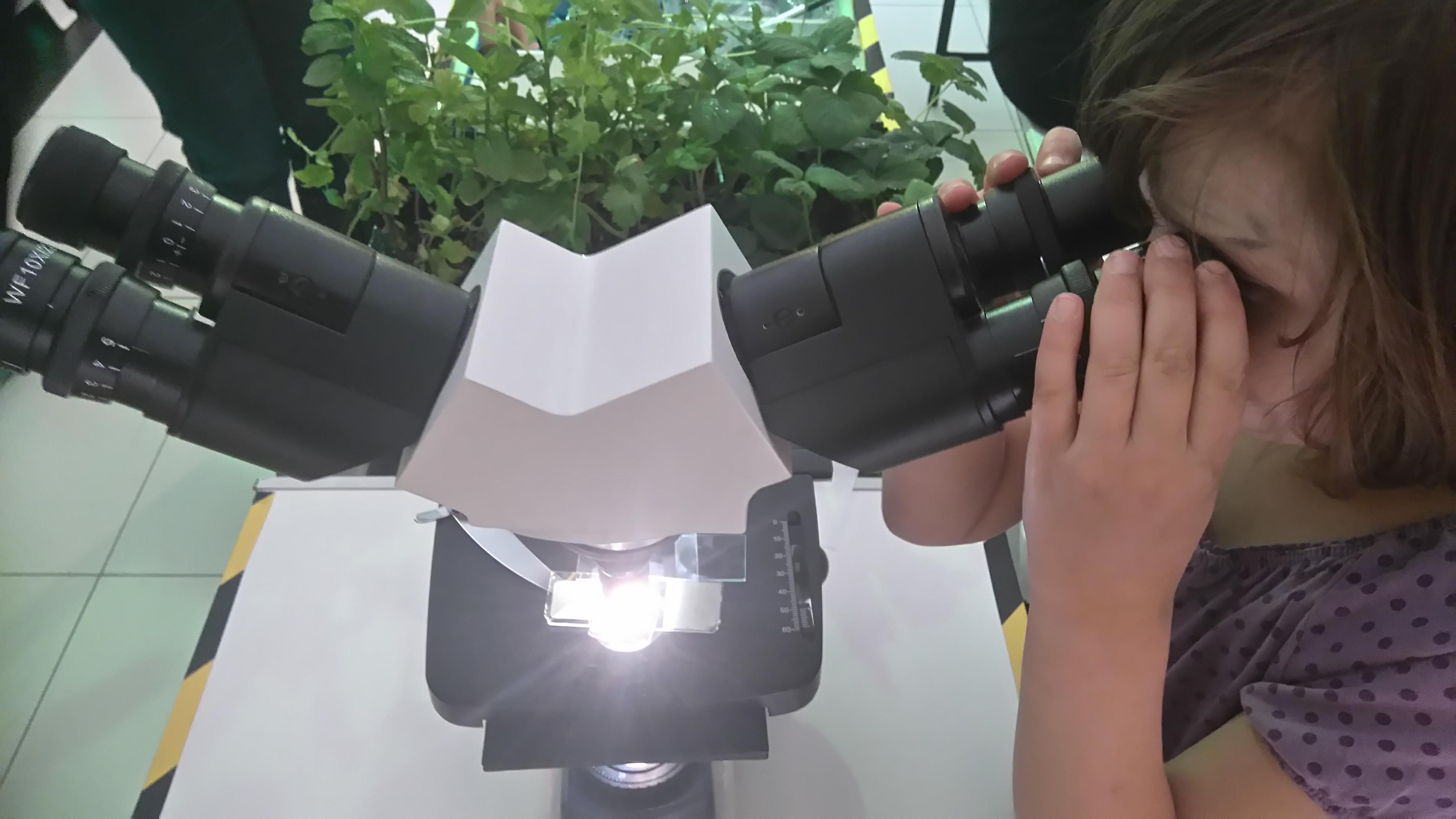 obserwacje przez mikroskop