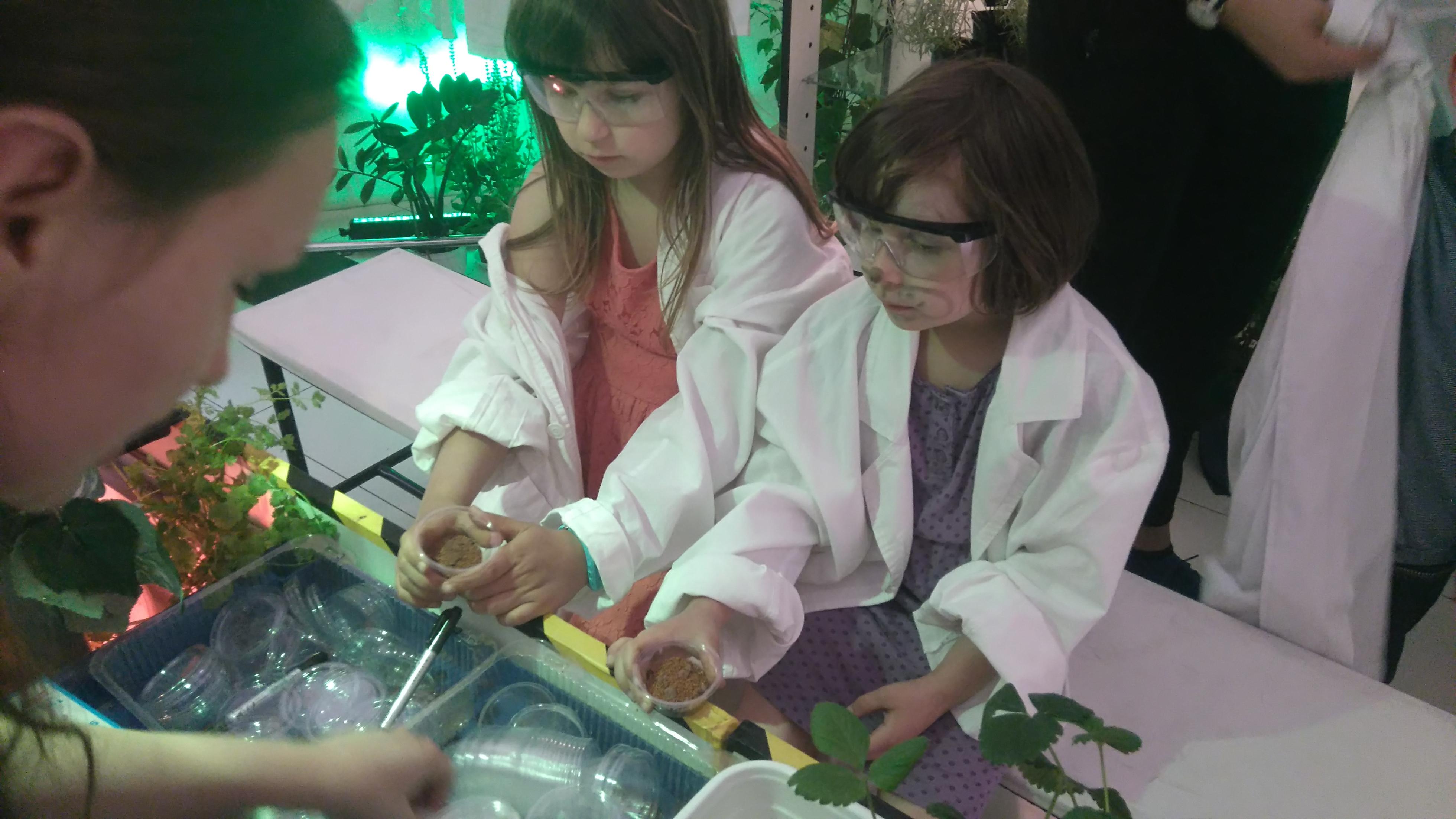 dziewczynki ubrane w fartuchy i specjalne okulary sadzą rzeżuchę